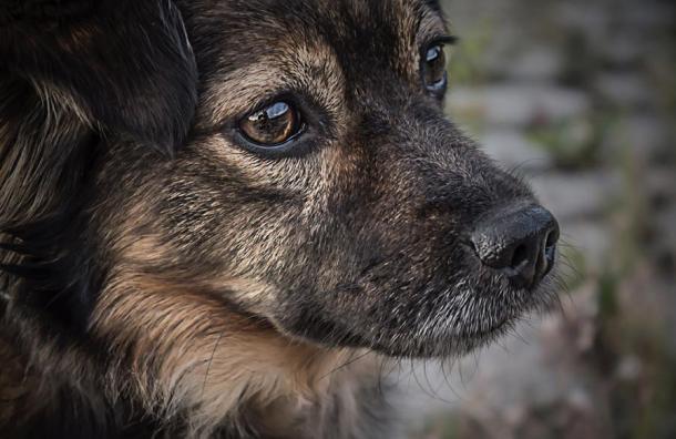Un valiente perro callejero dio su vida para evitar un asalto. El ladrón lo mató cobardemente