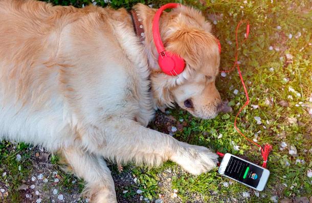 Spotify presenta la nueva función para acompañar a las mascotas